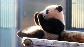 上野動物園、知られざる動物たちの「お値段」