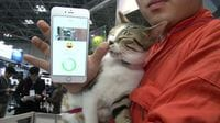 Is Your Cat Unhappy? Hi-Tech Collar Could Give a Clue