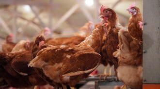 日本初の「動物福祉賞」は消費の新潮流を生むか