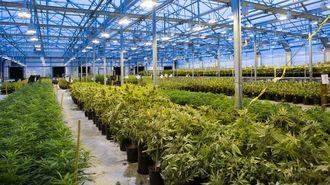 アメリカ「大麻合法化」は大統領選で加速する