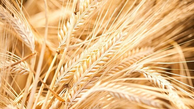 プラゴミ削減へ「大麦ストロー」にかかる期待