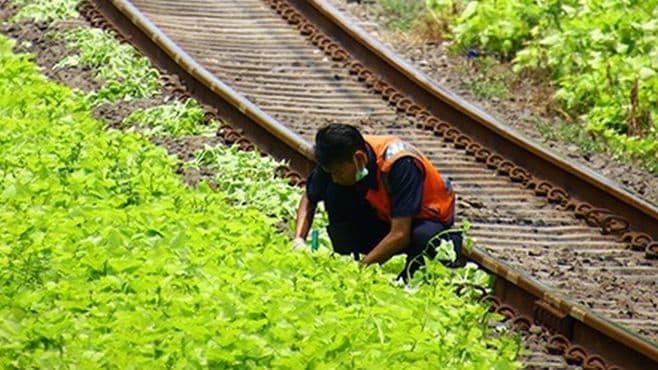 ジャカルタの鉄道、線路脇にある植物の正体