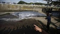 Japan Says to Resume Whaling, Fleet Sails to Antarctic Ocean Tuesday