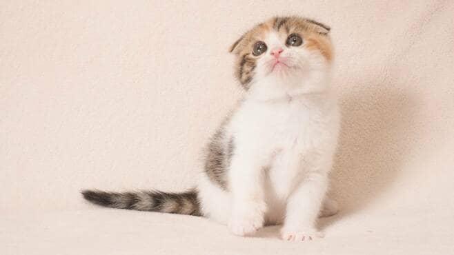 猫が飼い主の顔色を読んで振る舞っている証拠
