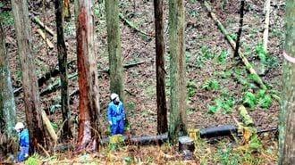 なぜ紛糾?森林の間伐をめぐり関係者が対立