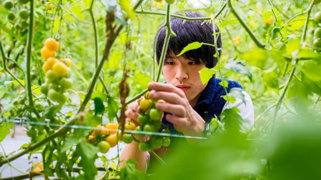 日本人が知らない「植物ブリーダー」の実態