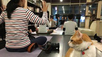 猫ヨガが「メンタル強化」も期待できるワケ