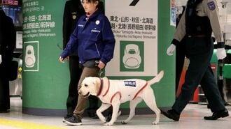 新幹線や駅のテロ対策、「探知犬」は役に立つ?