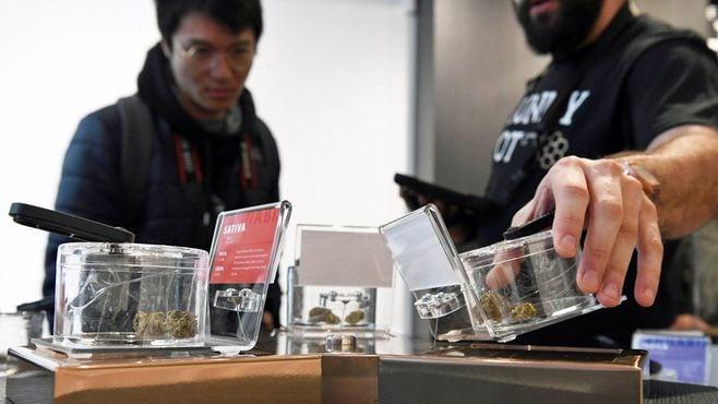 島津製作所が「大麻合法化」で注目されるワケ
