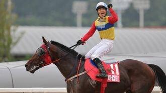 韓国競馬が「日本馬排除」で失った大切なもの