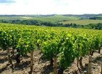ワイン造りの思想 その2 テロワール主義《ワイン片手に経営論》第13回
