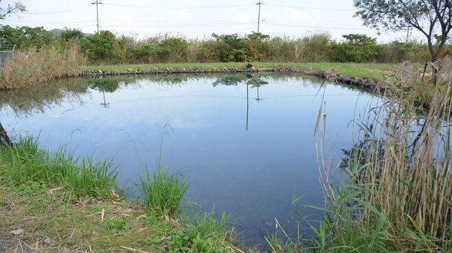 犯人は生き物好き?池にブラックバスを放つ謎