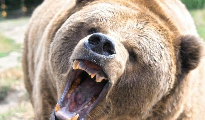 田舎の山に「草食系クマ」が増加した意外な背景