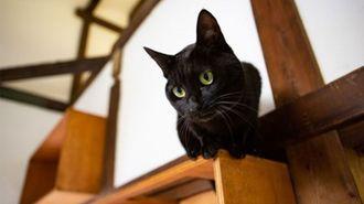 猫好き限定!賃貸「ねこのいえ」を見に行く