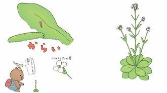 強烈にたくましい「8つの植物」のすごい生き様