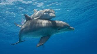 日本に年300ものイルカやクジラが「漂着」する謎