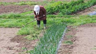 農業の「外国人就労特区」法案に潜む重大問題