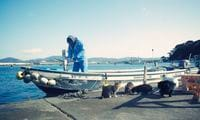Do you know Japan's Cat Island?