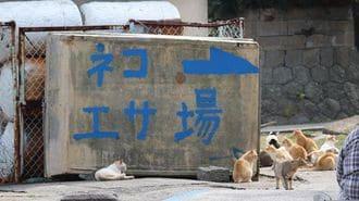 猫の楽園「青島」の想像よりはるかに厳しい現実