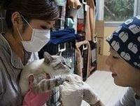 震災、原発事故で飼い主の元に帰れない犬猫たち、獣医師らが支援活動に奮闘