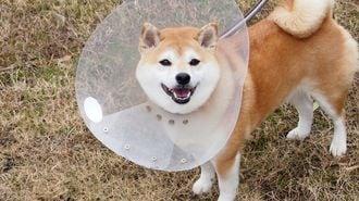 「ペット専用」保険、今更聞けない基本中の基本