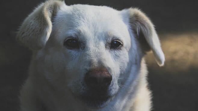 犬猫売るほど飼育放棄が頭をよぎる店員の苦悩