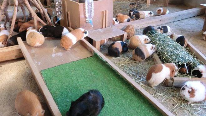 福岡の「閑散だった動物園」が復活できた理由