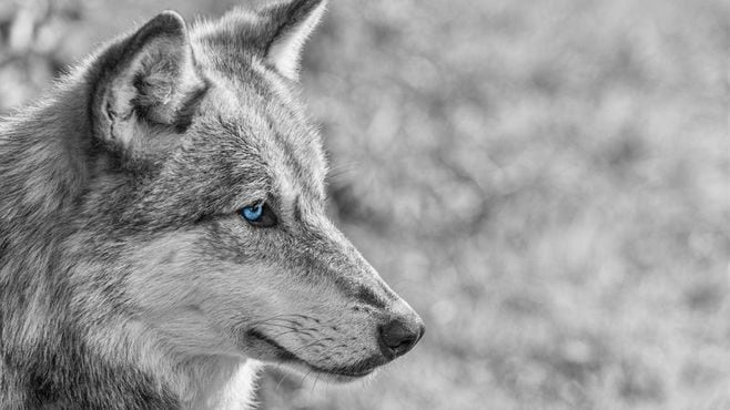 ヒトと犬がネアンデルタール人を絶滅させた