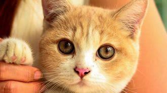ネコの本音は「人間のことが大好き!」だった