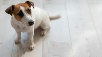 ペット可物件に潜む「高額請求トラブル」の不条理