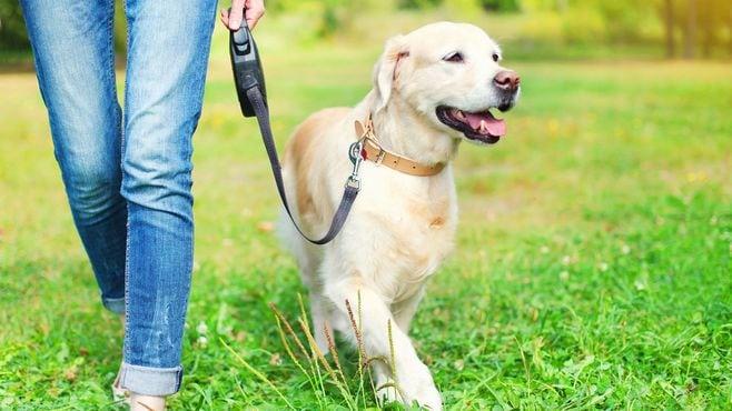 「犬の散歩」ほど侮れない運動はそんなにない