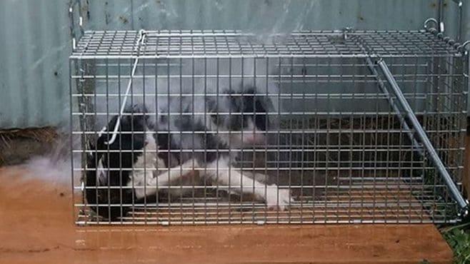 動物虐待を「芸術作品」と喜ぶ人々の怖い闇