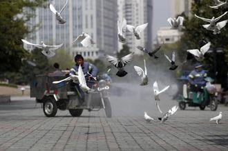 鳥インフル「世界大流行のシグナル見逃すな」