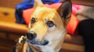 「保護犬」2匹の里親になった彼女が見た輪郭