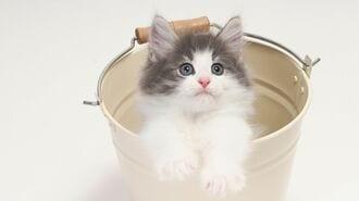 猫の珍行動に困る飼い主が意外と知らない真実