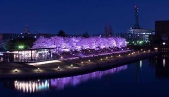 なぜ日本の公園は、あれもこれも禁止なのか