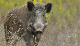 田舎暮らしを夢見る人が知らない獣害のヤバさ