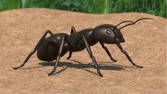 アリという昆虫の「最期」はあまりに突然訪れる