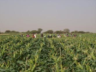アフリカは、世界の食料庫になりうるか?