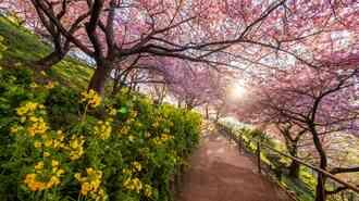 日本の美しい「季節の変化」を英語で読んでみる