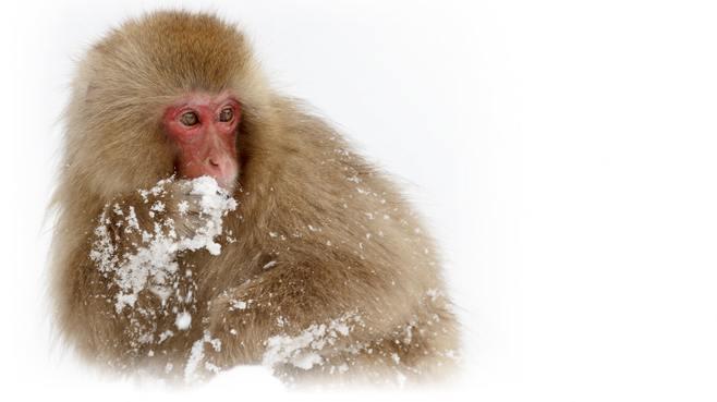 純白だけど注意!「雪」は食べない方がいい理由