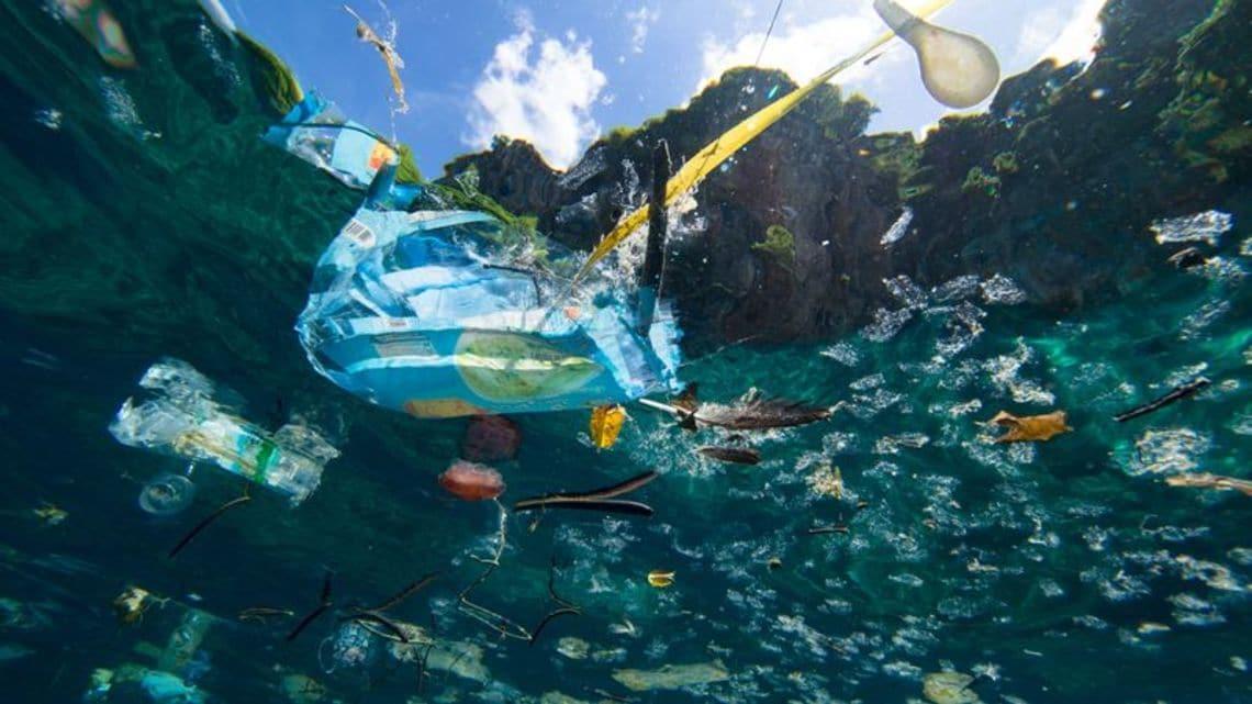 日本人は「海の不健康」の深刻さをわかってない | 政策 | 東洋経済 ...