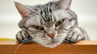 異例のヒット!ネコの「ひげケース」誕生の裏側