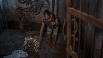 「犬肉」の消費が急増するインドネシアの衝撃
