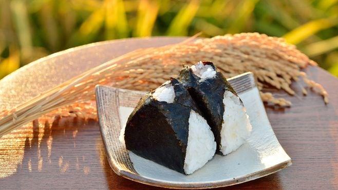 糖質制限論争は初期人類の食に答えがあった