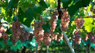 気づけば超人気「甲州ワイン」は何がスゴイのか