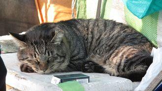 猫とホームレスが織りなす何とも柔和な共生