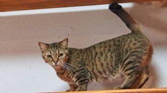 「保護猫の支援」がビジネス化する深刻理由