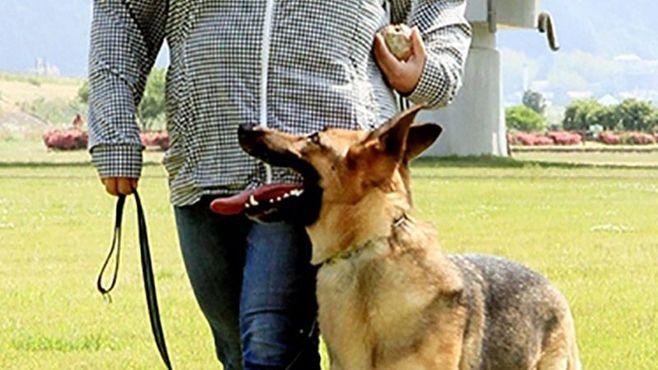 需要増なのに足りない、民間「警察犬」の実情
