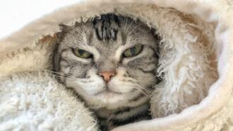 今シーズンの冬がとてつもなく「寒い」根本理由